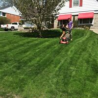 Lawn cutting . Grass cutting . Milner's lawn care