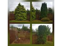 All tree work