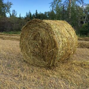 Green feed and hay bales
