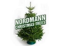 Christmas trees and stands on sale