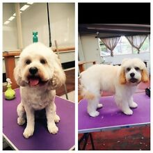 Dog groomer available Kallaroo Joondalup Area Preview