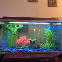29 gallon Aquarium FULLY OUTFITTED (including fish, chemicals..)