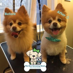 Dog Grooming for $35! Professional!