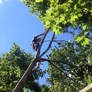 Quick acting Tree Service and Storm clean up Peterborough Peterborough Area image 1