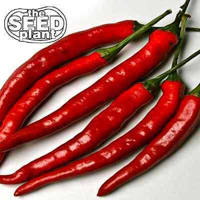 Cayenne Long Slim Pepper Seeds - 100 SEEDS NON-GMO Pepper 100 Seeds