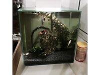 Fluval Edge 46l Tank+ fish+ Accessories