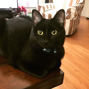 Rehoming my cat + we will give his stuff for free