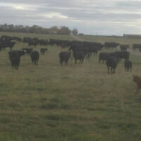 EXC. 6720 ACRES OF PASTURE AND HAY LAND IN CENTRAL SASKATCHEWAN