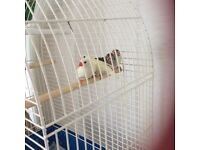 Two pairs of Finches with cage
