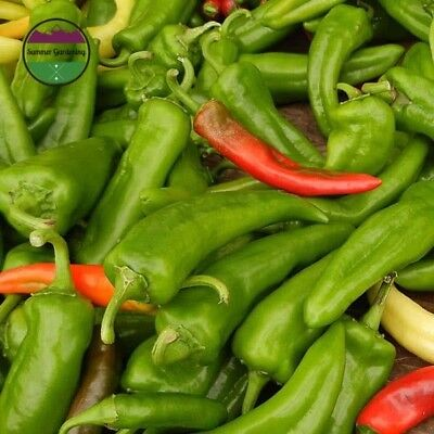- USA HEIRLOOM Organic Anaheim Chile Pepper 25-200 seeds (container)