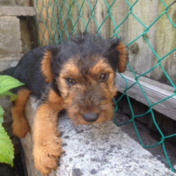 Gumtree Cardiff Dogs Free To Good Home