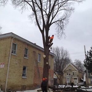 Tree services  London Ontario image 10