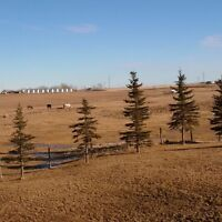 Horse boarding East of Airdrie