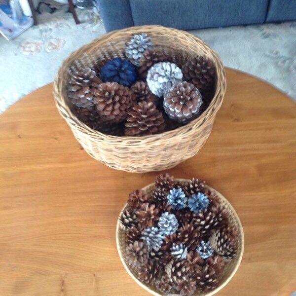 Cedar and pine cones