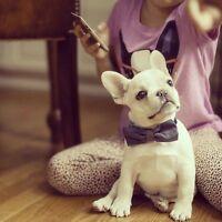 Cherche, pomenarien, Bulldog francais ou Boston terrier.