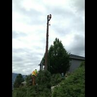 Certified Faller Available in West Kelowna Area (TREE REMOVAL)