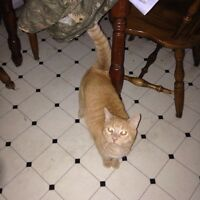 Looking for a home for my fixed orange cat
