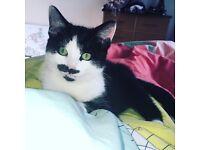 Kitten needs new home