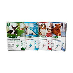 RUFFIN'S PET-STRATFORD- ADVANTAGE FLEA DROPS NOW AVAILABLE Stratford Kitchener Area image 2