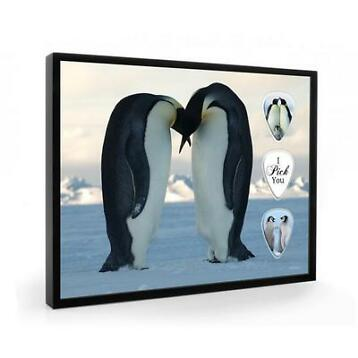 Pinguins plectrumdisplay