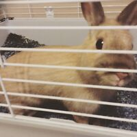 Selling my bunny(NEEDS TO GO BUY THE FIRST OF JULY)!
