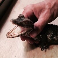 Reptiles for sale! Snakes! Lizards! Turtles! Deals & More!