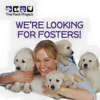 Looking for Fosters for our Dogs