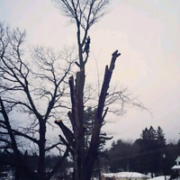 Qualified & professional tree services