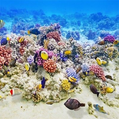 Справочный материал Underwater Coral Reef Fishes