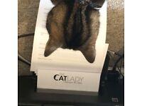 Professional Cat Sitting & Dog Walking, cat sitter, pet sitter