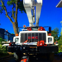 TREE CUTTING - REMOVAL