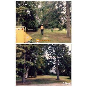 Tree Removal/Care Kawartha Lakes Peterborough Area image 7
