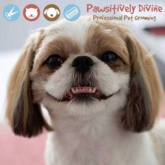 Pawsitively Divine Pet Grooming