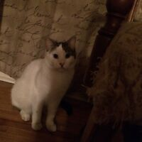 Our cat needs a good home