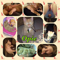WMFCW- Posting missing Opie from Elmwood area