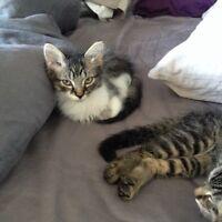 Forever Kittens Looking for Forever Homes