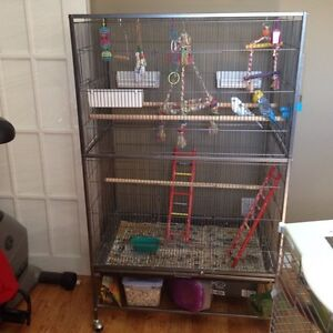 Three budgies with large cage, toys and food.