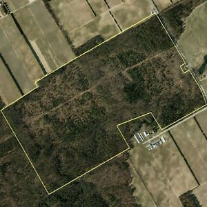 193 acre Forest Property: For Sale by Home Suite Home Ltd.