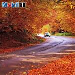Mobil1 Products and More