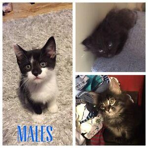 Kittens looking for loving homes