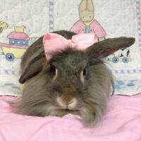 BUNNY RESCUE-Hi My name is Chanelle and i need a home