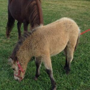 Miniature mare and foal for sale