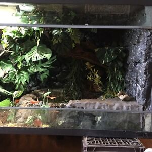 ONE OF A KIND REPTILE ENCLOSURE