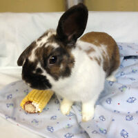 BUNNY RESCUE- Hi my name is Thomas and i need a home