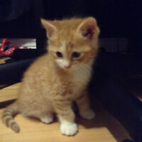kittens for adoption by ca-r-ma Moncton