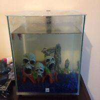 Fish tank with red beta fish