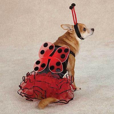 Casual Canine  LUCKY BUG Lady Bug Dog Pet Halloween Costume](Lucky Lady Costume)