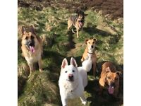 Dog Walker Dog Walking Dundee, Chuq-a-Loup Dog Walking Services