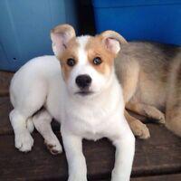 Adopt Sheba!