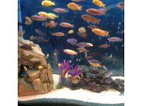 Cichlids from £5 or 10 for £40